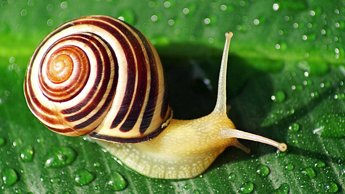 snails in july